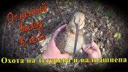 Охота на тетерева, вальдшнепа и солонец на зайца