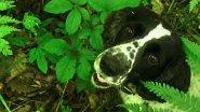 Есть ешё ЖЕНЬШЕНЬ в Уссурийской тайге. Выращивание женьшеня семенами