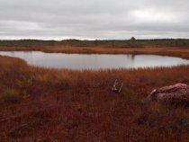 Осень...болото.