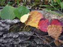 От лета к осени...... с переходом в зимушку..