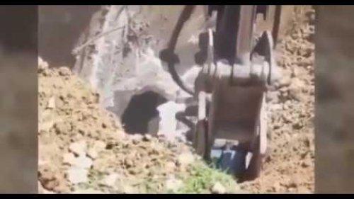Группа рабочих случайно раскопали берлогу огромного медведя
