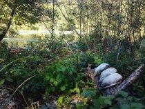 В лесном озере 23.09.17