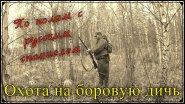 Охота на боровую дичь. С русским спаниелем по полям. Работа спаниеля по зайцу