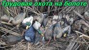 Трудовая и удачная охота на утку на болоте