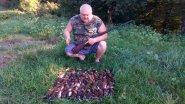 Охота на перепёлку с легавой собакой бретонский эпоньоль . Сочи 20 сентября 2017 г.(3)