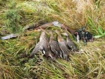 Утиная охота 24.09