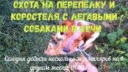 Охота на перепёлку и коростеля с легавыми собаками в Сочи 01.10.17 г .