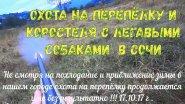 Охота на перепёлку и коростеля с легавыми собаками в Сочи 17.10.17г .