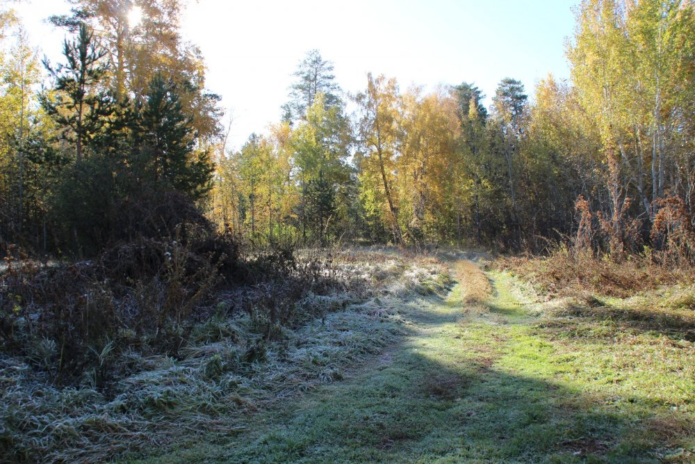 Лесными дорогами.