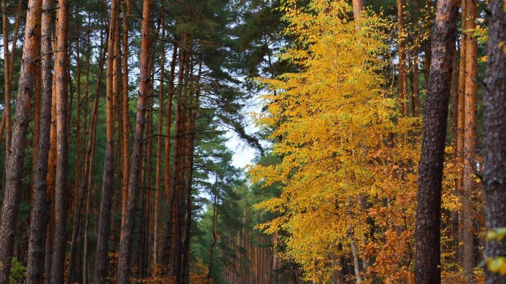 Октябрь. Белгородская область