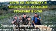 Охота на перепёлку и коростеля с легавыми собаками в Сочи 04.10.2017 г .