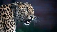 Животные Уссурийской тайги в Приморском сафари парке