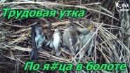Трудовая утка.По я#ца в болоте.Трудовые трофеи.Difficult hunt for a duck.Hunting in the swamp.
