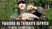 Рыбалка на хариуса / Ловля хариуса на блесну / Серия 1-2