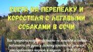Охота на перепёлку и коростеля с легавыми собаками в Сочи 11.10.2017 г .