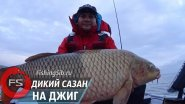 Не перевелись еще сазаны в наших водоемах! Сибирский гигант на 13 кг...
