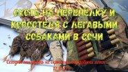 Охота на перепёлку и коростеля с легавыми  собаками в Сочи 12.10.17 г .