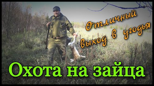 Охота на зайца с русскими гончими. Попутно добыл три рябчика с подхода. Рекомендуем к просмотру!
