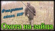 Охота на зайца с русскими гончими. Открытие сезона 2017
