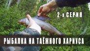 Рыбалка на таежного хариуса. Республика Коми