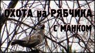 Охота на рябчика с манком / добыча рябчика в тайге