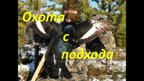 "Охота на тетерева по ""падлючему"" снегу."