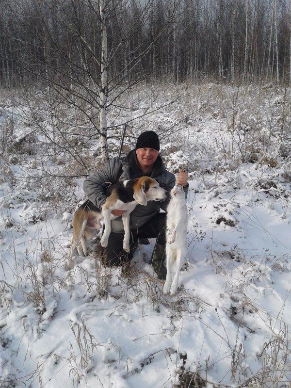 Охота с Эстонской гончей.