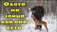 Охота на зайца с русской гончей как она есть. Рекомендуем к просмотру.