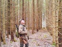 Лесные прогулки.