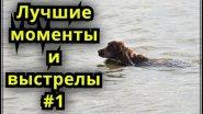 Лучшие моменты и выстрелы на охоте #1. Сезон 2017. Охота на утку.