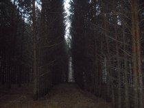Вот такие у нас стали теперь лесопосадки.