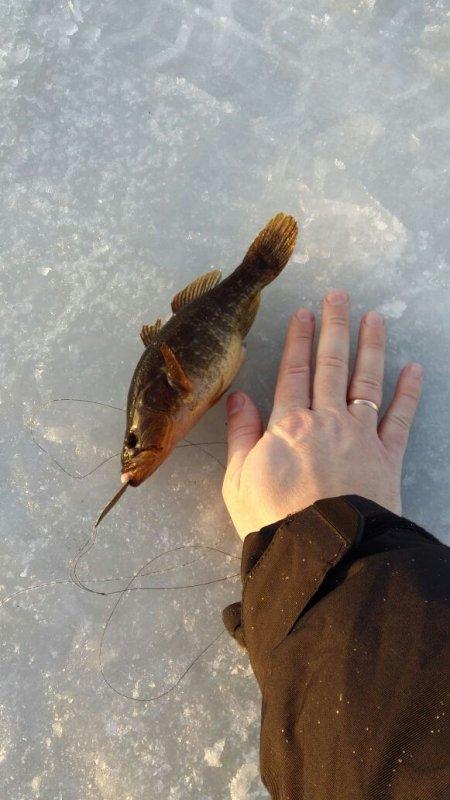 Первый лед по ротанам 2