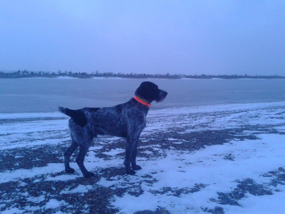 На Томи первый лед. Брайт Гектор III, провожает последних уток.