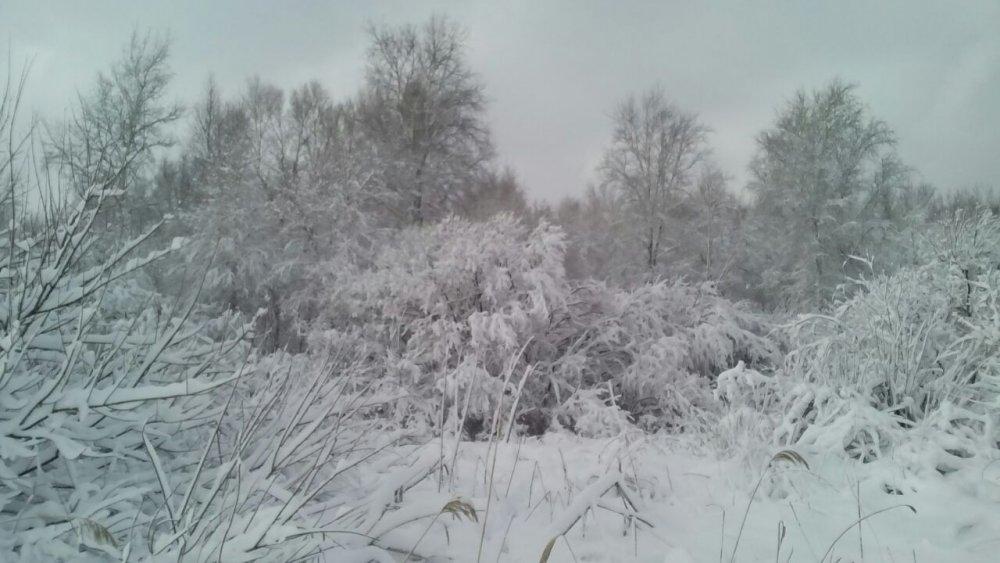Алтай, 11 ноября