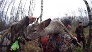 Загонная охота на косулю 11.11.17. Девушка разделывает косулю