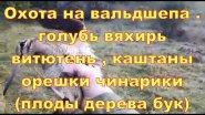 Охота на вальдшнепа , голубь вяхирь витютень , каштаны орехи чинарики .......04.11.17 г .