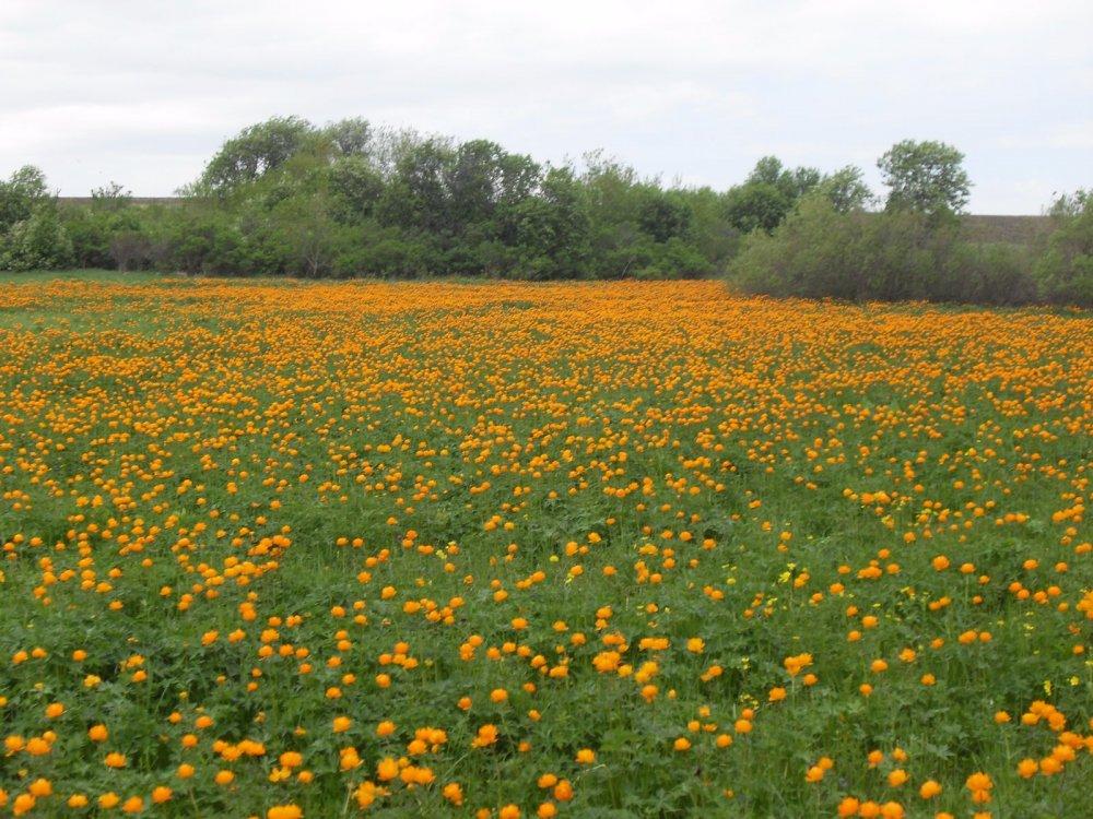 Жаркая поляна
