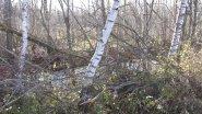 Охота на вальдшнепа с легавой, второе поле Дратхаар