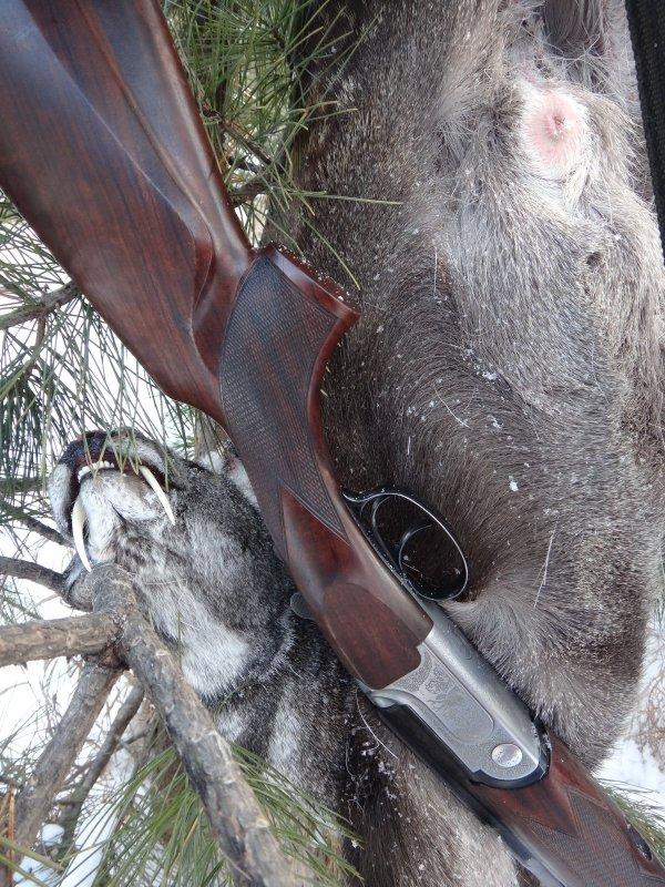 Охота на самца кабарги с подхода