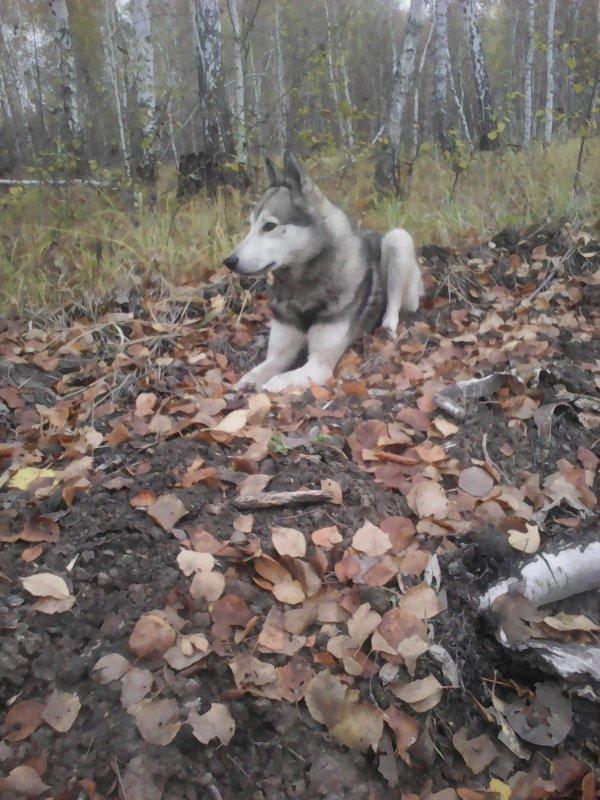слушает осенний лес