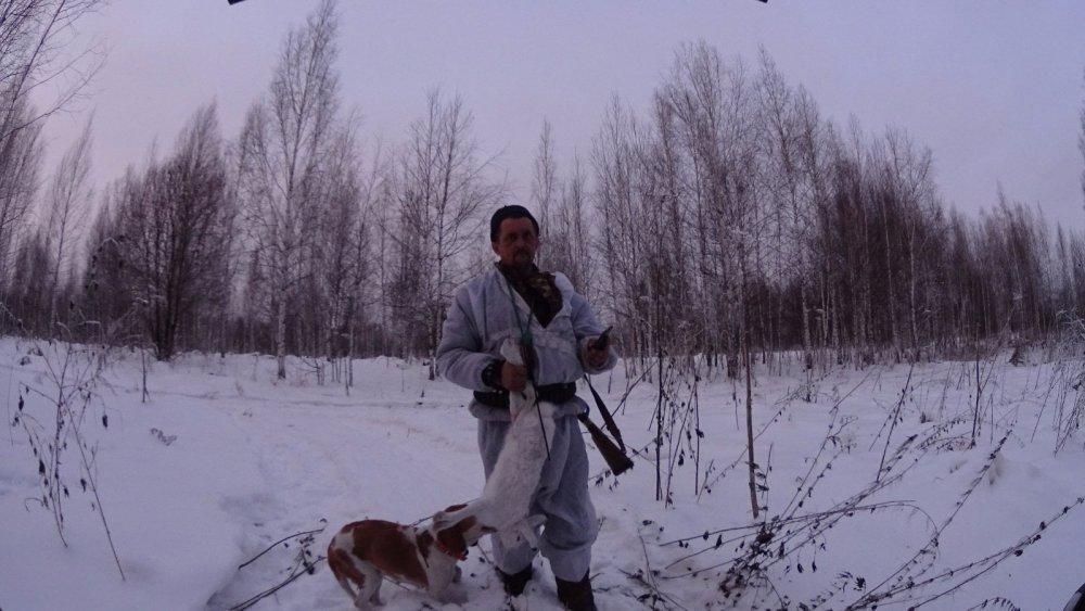 охота с эстонской гончей