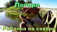 Рыбалка на севере. р Печора. Микроджиг. Жор окуня.