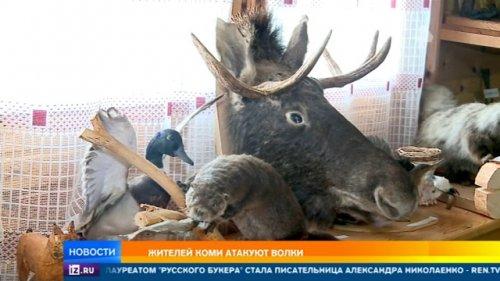 Жителей Коми атакуют волки