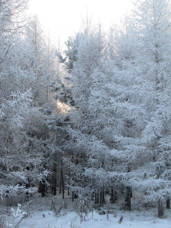 Зимние наряды)