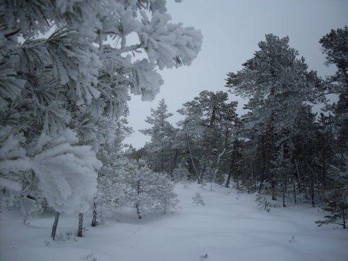 простой прогноз - лес, да мороз