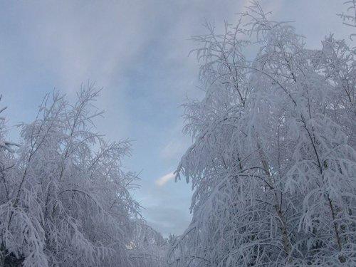 небо..лес..