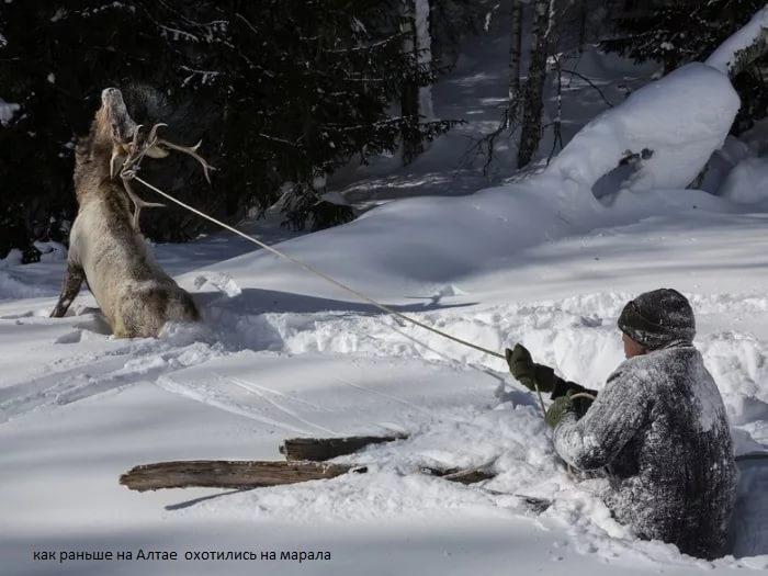 для охоты нужны только лыжи и глубокий снег