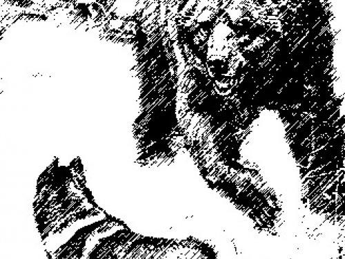 Схватка с медведем шатуном