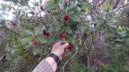 Лес, кабаны, ягоды.