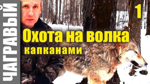 Охота на волка видео 2017-2018 новинки / Смотреть бесплатно8 ...